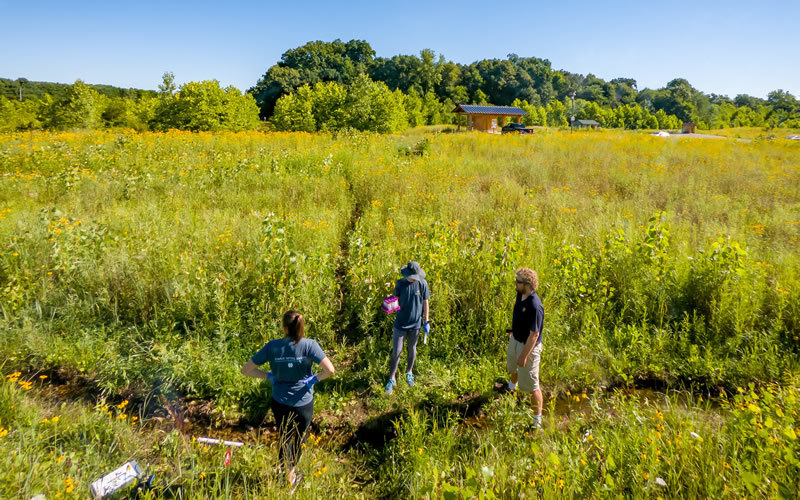 Three researchers stand among tall green grasses and a narrow creek.